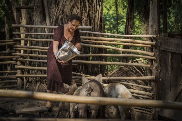 Cap 109 – Cena 07 – Cunegunes ( Elizabeth Savala ) dá lavagem aos porcos. Manuela ( Dhu Moraes ) traz comida de Cunegundes. Arroz, feijão, farinha e dois pés de frango.